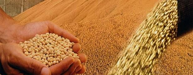 Resultado de imagen para semillas de soja