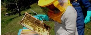 Buscan potenciar el desarrollo apícola entrerriano