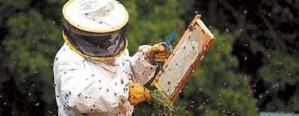 Recomiendan monitorear las colmenas