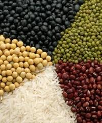 Análisis de semillas: importancia y beneficios