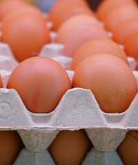 Técnicas para la detección de Salmonella en huevos
