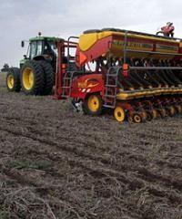 Consideraciones a la hora de sembrar trigo