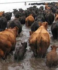 Recomendaciones para prevenir enfermedades zoonóticas