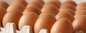 El consumo y la producción de huevos crecieron en 2016