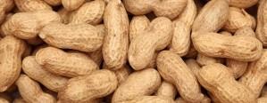 Aseguran que la producción de maní argentino crecerá un 32%