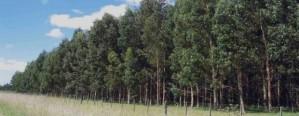 Se conformó la Mesa Forestal de Entre Ríos