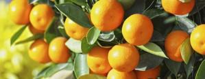 Entregaron aportes a productores citrícolas