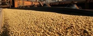 Crece la participación sojera en la matriz exportadora