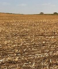 Manejar los sistemas para disminuir el uso de herbicidas