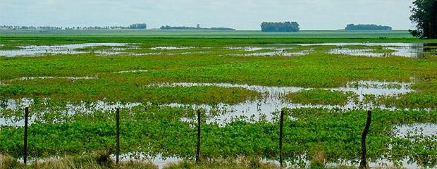 Efectos del cambio climático en la producción agropecuaria