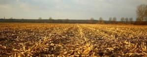 Clima: Ambiente de otoño sobre el centro del país