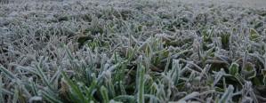 Se esperan heladas intensas en la zona central del país
