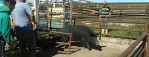 Cómo incide la castración sobre la conducta animal