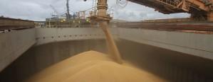 La liquidación de divisas del agro superó los 600 millones