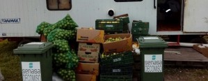 Decomiso frutas tropicales y cítricas con riesgo sanitario