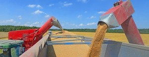 Transportar granos es hasta un 76% más caro que en Brasil