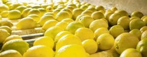 México abre su mercado a los limones argentinos