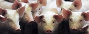 Estados Unidos volverá a exportar carne a la Argentina
