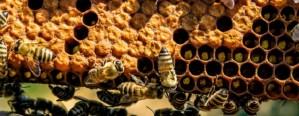 Siguen recuperándose los precios de exportación de la miel