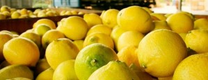 Las exportaciones de limones crecieron, en valor, un 5,6%