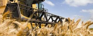 La producción de trigo fue 62,9% superior al ciclo anterior