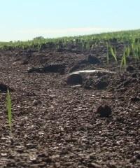 Predecir erosión para proteger la productividad de suelos