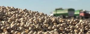 Soja: El productor necesita lograr 2.000 kg/ha