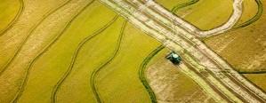 Entre Ríos: La siembra de arroz se retrasó por las lluvias