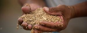 La CACER ofrecerá a productores análisis de calidad de trigo