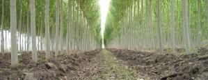 Preparan curso sobre clasificación visual de madera aserrada