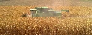 Crecimiento de la actividad agrícola y crisis lechera