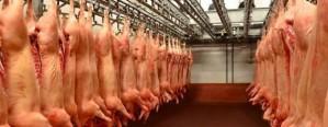 Frigoríficos porcinos comenzarán a pagar a cuenta de IVA