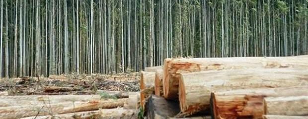 Cayó la superficie de bosques talada en el país en 10 años