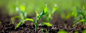 Comienza a mejorar el estado de reservas de agua para maíz