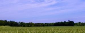 Las tasas de interés deprimen al mercado inmobiliario rural