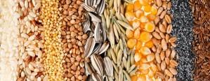 Lograron consensos para avanzar a una nueva ley de semillas