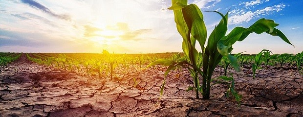 La seca no cede y la campaña está en un momento crítico