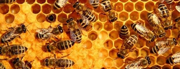 Simplificaron las normativas para la miel a granel